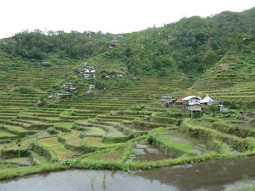 フィリピン・コルディリェーラの棚田群 — フォトギャラリー フィリピン・...  フィリピン・コ