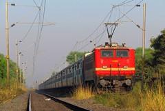 22222 Tamil Nadu Express (Raj Kumar (The Rail Enthusiast)) Tags: new delhi indian express chennai railways tamil raj nadu bhopal kumar 22222 wap4 habibganj misrod sx30is