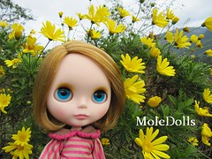 Blythe Custom Commission by MoleDolls