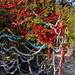 360_Trees_2011_143