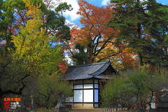 Kitano Tenmangu Shrine (fravenang) Tags: autumn fall japan temple kyoto shrine  absolutely  kitano     tenmangu kitanotenmangushrine mywinners   perrrfect bbng