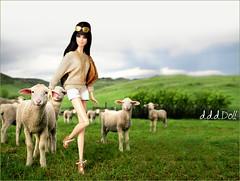 Farm (dddDolls) Tags: green gold photo doll sheep farm country barbie harley sunglass aphrodite davidson mattel