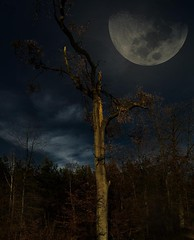 Forest moon (KF-Photo) Tags: moon mond oak blitz baum werwolf moonshine vampir eiche schnbuch mondschtig mondschein nachtstimmung blitzschlag kelterweg