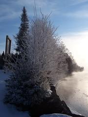 Sentinelles de rivage, Lac-Baker 1 (France Smyth) Tags: conifers givre deciduoustrees pinaceae coniferae conifres hardrime pinaces arbresfeuillus