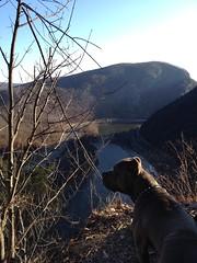 12.24.2011 - hiking at mt minsi, delaware water gap, pa (wuvy) Tags: park dog dogs nationalpark hiking parks hike pitbull napoleon nationalparks pitbulls mtminsi apalachiantrail