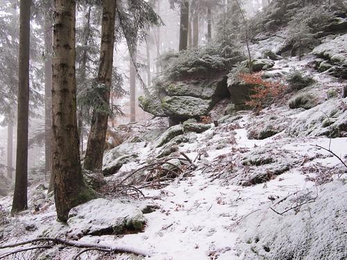 Spruce-Fir-Beech Forest: Abies alba (+ Picea abies) (48°33' N 13°47' E)