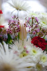 Soft & fluffy (SolsticeSol) Tags: flowers white flower floral vertical soft pretty image bokeh images fresh daisy dreamy bouquet florals bouquets carnations elegance whiteflowers beautifulflowers prettyflowers floralarrangements floralbouquet flowerbokeh redcarnations floralbouquets floralbokeh prettybouquets softanddreamy softandpretty carnationflowers dreamyflowers beautifulflowerarrangements beautifulflowerpictures beautifulflowerimages imagesofprettyflowers dreamyflowerimages softdreamylight elegantbouquets softdreamyflowerimages imagesofflowerbouquets flowerbouquetimages bokehedflowers