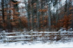 All fenced in (Lynn McFulton) Tags: trees snow landscape dreamscape fenceposts jan4 incamera blurmotion project265 3652012 2010yip