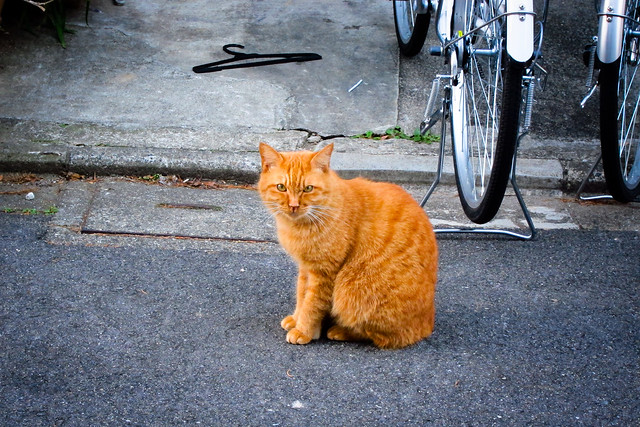 Today's Cat@2012-01-08