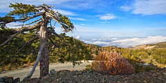 High in the Troodos Mountains (Must See Original Size!) (Allard One) Tags: road november autumn sky tree fall nature landscape island high nikon solitude country herfst scenic cyprus peak wideangle panoramic boom silence vegetation vista outlook rough lucht cinematic treeline eurasian eclectic bold gettyimages mountolympus eiland abovetheclouds absence mountainrange 2011 kbrs 14mm troodosmountains colourpop filmisch beautyinnature easternmediterranean extremeterrain woest nohdr singleraw nikcolorefexpro boomgrens d700 mediterraans kpros republicofcyprus nikond700 nikkor1424mmf28  21crop  nikonfx kypriakdmokrata allardone allard1 gpsrecorder duohardstrak kbrscumhuriyeti fullframepower  southeasternmost zuidoostelijkst tooos 1952metres allardschagercom