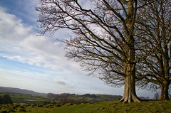 Towering over the Tywi (EionaR. [busier than ever]) Tags: wales carmarthenshire nationaltrust wfc dinefwrcastle dinefwrwfc