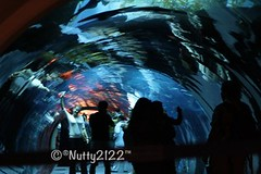 (nutty2122) Tags: me by canon dubai uae like add noura 2011 نوره 1000d مفضلتي