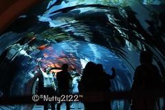 (nutty2122) Tags: me by canon dubai uae like add noura 2011  1000d