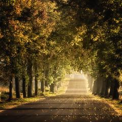 Alley on Warmia (warmianaturalnie) Tags: road autumn trees tree way alley poland polska droga aleja jesień warmia wow1 wow2 wow3 wow4 drzewo drzewa wow5 wowhalloffame