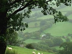 Green, Green (Églantine) Tags: color verde green wales composition wonder poetry paradise sheep jo vert softfocus layers serene grün idyll paysage 緑 hfholidays 绿色 bej 녹색 walkingholidays