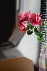 even the flower fades [Week 2/52] (svllcn) Tags: light flower art photography nikon bokeh d5100