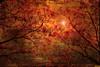 El sol de oriente (Simón73 melancólico) Tags: cruzadasgold cruzadasi cruzadasiii