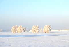 Snow everywhere (Tobi_2008) Tags: schnee winter sky snow tree nature field germany landscape deutschland saxony natur feld himmel ciel sachsen landschaft arbre baum acker bestcapturesaoi mygearandme mygearandmepremium mygearandmebronze chariotsofartists doubledaragon