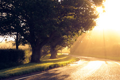 summer fairytale (andrew evans.) Tags: lighting morning trees light summer england sun mist nature misty fog sunrise landscape kent nikon flare rays sunrays f28 d3 2470mm