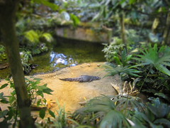 BioDome TiltShift (Thought Knots Design) Tags: biodome montreal quebec canada great white north coast travel traveler travelling visit tour thought knots design tkd thoughtknots brand logo create creative creatively creation artwork portfolio catalogue photography graphic future funk pop colours colors color colour thoughtknotsdesign thoughtnautical nautical life live natural antigonish atlantic ocean east maritime grime canadian novascotia artist photo art abstract surreal