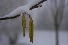 Invierno 2012 (Miguel. (respenda)) Tags: nieve soria niebla frio lvega