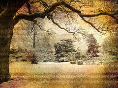 Winter came down to our home one night (Nick Kenrick.) Tags: winter snow tree rockland governmenthouse saariysqualitypictures zedzap