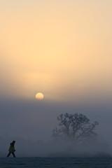 'Brisk' (burnthaggis) Tags: park uk england mist cold tree fog sunrise canon landscape oak britain 7d farnham