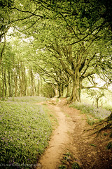 Dorset woodland path. (broadswordcallingdannyboy) Tags: trees england copyright bluebells woodland landscape spring path country dorset pathway englishcountryside westcountry britishcountryside broadwindsor southwestengland leonreilly flickrnova leonreillyphotography copyrightleonreilly