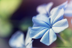 Flower (Garrett Wade (v2lab)) Tags: blue flower macro colors beautiful outside crossprocessed pretty close garrett wade wwwgarrettwadephotocom