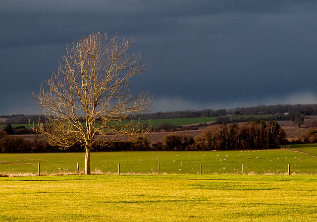Sunshine highlights a tree against rainclouds on Broadhalfpenny Down in Hampshire