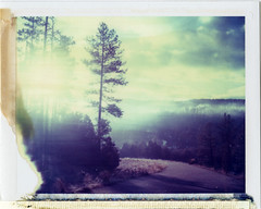 Forest Lakes, AZ (moominsean) Tags: morning winter arizona fog forest sunrise polaroid rim 190 mogollon forestlakes iduv expired022008