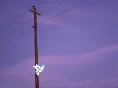 357/365:  Peace Dove (MountainEagleCrafter) Tags: sooc straightoutofthecamera dove peace olivebranch telephonepole powerlines sky christmas neon neonlight day357 project365 project365231211 project36523dec11 project36612011365 3661 365community thethingswesee 2011yip 365the2011edition 3652011 project752122311 12232011 357365 picnik