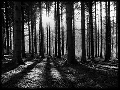 At the edge of the Dark Forest (kenny barker) Tags: trees winter bw monochrome forest landscape lumix scotland shadows dusk dunblane panasonicgf1 kennybarker