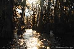 The Lighted Path (Studio281Photos) Tags: morning winter sunlight nature water sunrise glow texas bayou spanishmoss cypresstrees caddolake karnack