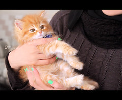 T σ f f є є ❥ (3 н σ υ d ♥) Tags: orange green cat nikon kitten caramel toffee نيكون توفي قطوه عهود 3houd ohoud blinkagain