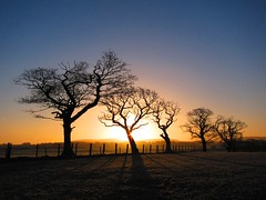 Sunrise over Croglin Fell (ambo333) Tags: uk trees england tree sunrise dawn cumbria brampton middlefarm oldchurchlane oldchurchfarm