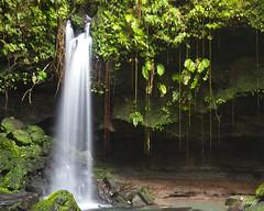 Emerald Pool waterfall, Dominica (gwhiteway) Tags: travel tourism water pool speed river long exposure slow falls falling waterfalls shutter emerald dominica