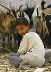 Boy Sitting In Front Of The Goats In A Market, Yemen (Eric Lafforgue Photography) Tags: boy portrait people man look childhood animal vertical youth outside person kid asia day exterior child looking market outdoor expression fulllength middleeast goat unescoworldheritagesite arabia innocence daytime yemen agriculture pastoral distrust enfant economy suspicion oneperson agricultural youngpeople onepeople contemplation colorphoto dayview youngboy makingaliving realpeople lookingatcamera colorpicture placeofinterest zabid arabiafelix arabianpeninsula 1people pastoralism youngperson colourpicture sittingposition agroeconomy blissfularabia