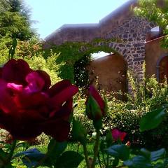 Photo (fischettiwine) Tags: whats etna sicilianwine luxurylifestyle 2000nd fullbodiedtaste fischettiwine muscamento rosesmoscamentoestate muscamentodoc sapidity httpswwwinstagramcompbfizjjind29