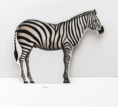 Zèbre (Nicoco Maillet) Tags: bw white black art animal 35mm 3d noir mark iii 14 sigma nicolas zebra 5d et blanc fond texte zèbre maillet coupage pliage zébrures larouflaquette