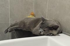 Bathroom Cat (Soresha) Tags: cat bonnie