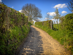 Spring Path (enneafive) Tags: blue sky green grass clouds spring hike trail hedge hawthorn crataegus