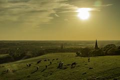 Parbold Sunset (ianandbarbara.bonnell@btinternet.com) Tags: uk sunset england church rural cows lancashire spire serene parbold northwestengland