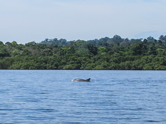 "Bahia de los Dolfines <a style=""margin-left:10px; font-size:0.8em;"" href=""http://www.flickr.com/photos/127723101@N04/27058347380/"" target=""_blank"">@flickr</a>"