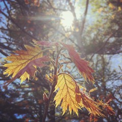 138/366 (grilljam) Tags: leaves spring maine fresh iphone dayhike 366days may2016