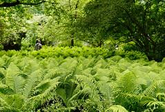 Mai Botanik - 2016-0009_Web (berni.radke) Tags: may growth mai botany botanicalgarden mnster botanik botanischergarten wachstum