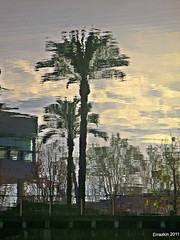 Palmeras reflejadas.Palm trees reflected (ironde) Tags: flowers reflections river palms spain palmeras estuary bilbao reflexions bizkaia basquecountry pasvasco euskalerria