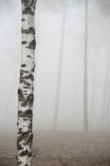Mystical (Frankss) Tags: autumn trees white mist tree nature silhouette misty forest geotagged grey gray thenetherlands hazy apeldoorn