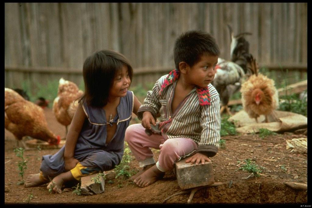 Enfants jouant parmi les poules