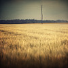 13/30: last year's harvest - IV (next_in_line) Tags: field barley forest square golden wire pole vignette